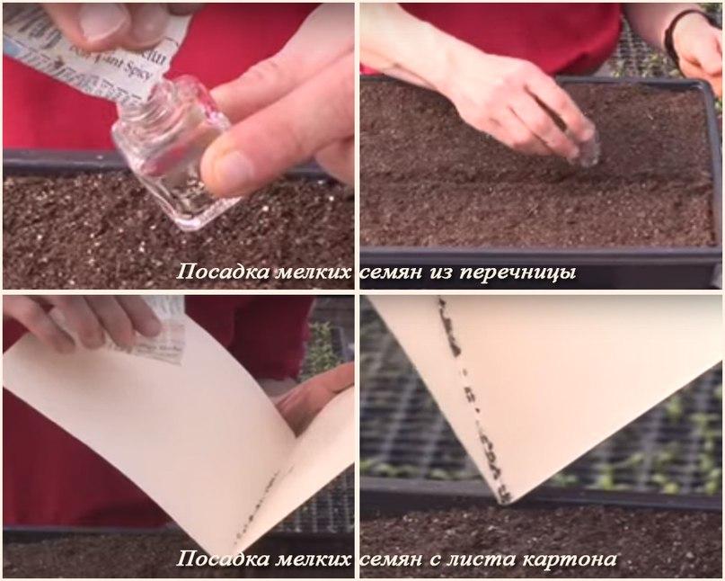 Способы посадки мелких семян-Мелкие семена из перечницы или с листа большого картона
