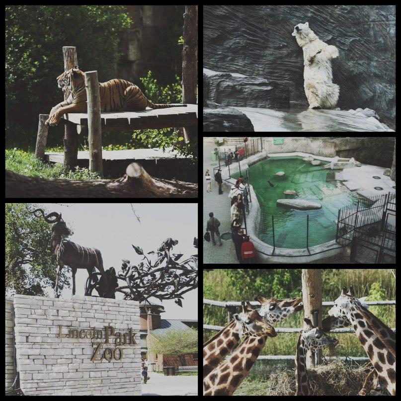 Городской зоопарк LQbuCbFH5HA