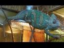 Кормление хамелеона на выставке экзотических животных Жизнь с холодной кровью
