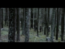 Темный лес (Villmark) 2003