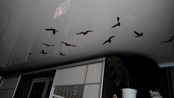 фото натяжной потолок наклейка летящие птички