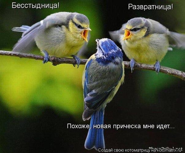 http://cs629320.vk.me/v629320556/3c4e3/S2ZSXC1cPo8.jpg