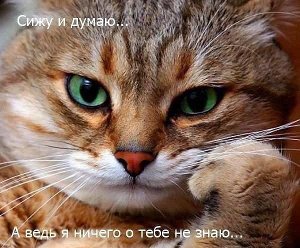 http://cs629320.vk.me/v629320556/3c526/KnRyJ66CpmU.jpg