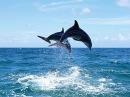 Дельфины Гагры Абхазия Видео Турист