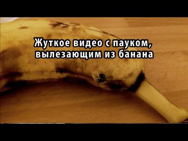 Паук из банана