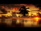 Sunset Palm - video designed by dreamscene