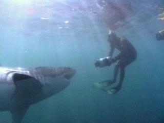 Жесть атака белой акулы на человека/животные/нападение/акула людоед/нападение животных на людей/