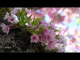 Мелодия души.. ВЕСНА (Mehdi - The First Day of Spring)