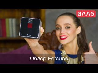 Видео-обзор Wi-Fi камеры для общения с животными Petcube