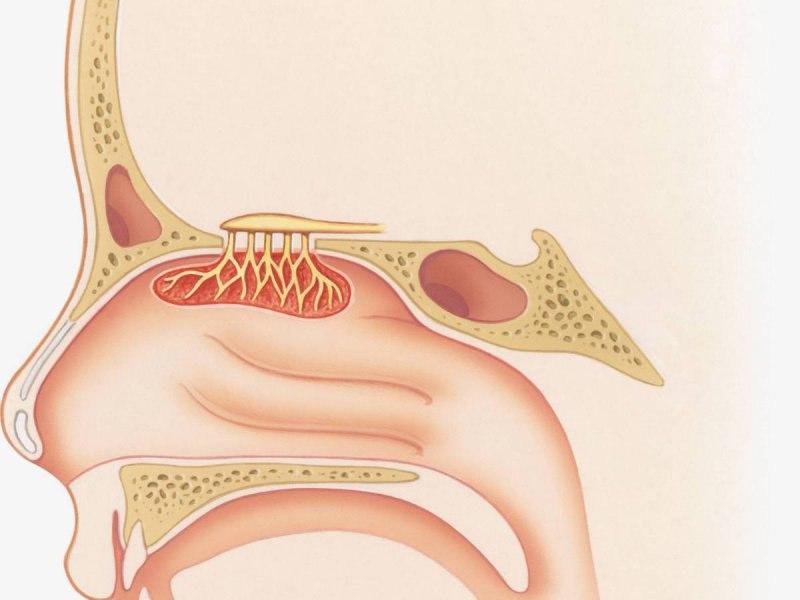 e2lassYnCWY - Изменения в организме без никотина