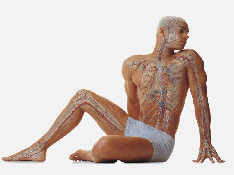 QC HeyOvjcU - Изменения в организме без никотина