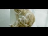 Музыка из рекламы ЦИАН - Говорящий кот (2016)