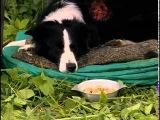 Фильмы про собак, ТЫ МЕНЯ СЛЫШИШЬ, лучшие детские