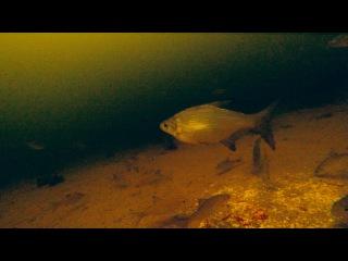 Зимняя прикормка на рыбалке. Подводное видео