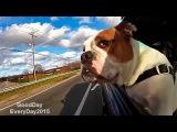 Собаки и открытое окно в салоне машины