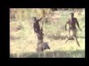 мега прикол обезьяны убегают на кабане неуловимые мстители