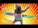 Самые смешные кошки 12 ∙ Приколы с животными 2015 ∙ Best Funny Cats Compilation · Part 12