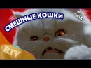 Самые смешные кошки 8 ∙ Приколы с животными 2015 ∙ Best Funny Cats Compilation · Part 8