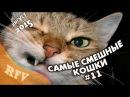 Самые смешные кошки 11 ∙ Приколы с животными 2015 ∙ Best Funny Cats Compilation · Part 11