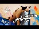Самые смешные кошки 10 ∙ Приколы с животными 2015 ∙ Best Funny Cats Compilation · Part 10
