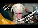 Самые смешные собаки 3 ∙ Приколы с животными 2015 ∙ Best Funny Dogs Compilation · Part 3