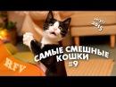 Самые смешные кошки 9∙ Приколы с животными 2015 ∙ Best Funny Cats Compilation · Part 9