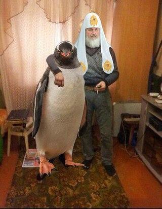 Глава РПЦ Кирилл посетил пингвинов в Антарктиде - Цензор.НЕТ 937