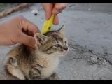 ツ Funny Cats Compilation 2016 || #3 || Приколы с КОТЭ! | Котами и кошками.