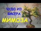 Бисероплетение для начинающих (Мимоза 1 часть) Мастер-клас