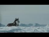Белый Плен - Eight Below (2006)