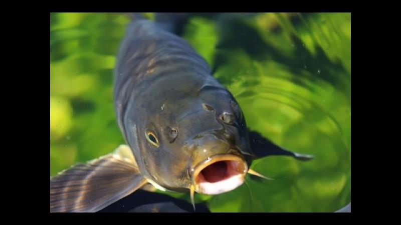 Супер уловистая насадка для карпа, карася, леща и другой мирной рыбы.
