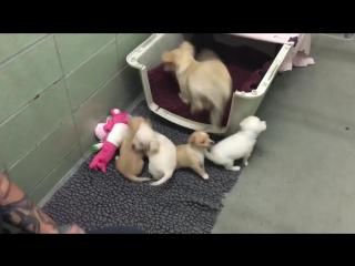 Трогательная встреча собака и щенки встретились после расставания