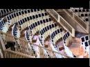 Познавательный фильм : Полиглоты танца