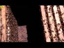 Как удержать пчелу от роения, деление пчелы, пасека