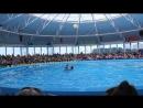 Дельфинарий, танец дельфина и человека) 18.08.2015