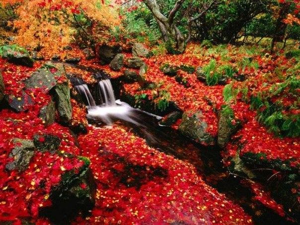 Картинки хорошее настроение осень