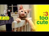 Funny Cats - A Funny Cat and Dog Videos Compilation, Cat fails 2016 || NEW HD