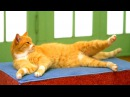 Cat Workout DVD Features Kitties Doing Aerobics
