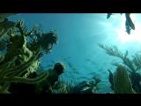 Гонка на вымирание (Discovery Channel) англ.яз