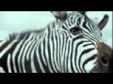 Фильм Жизнь Пи 2012 смотреть онлайн бесплатно в хорошем качестве