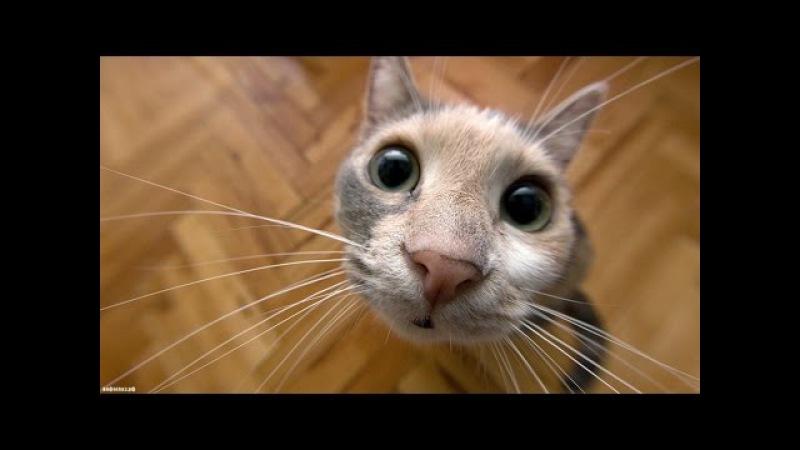 Видео про кошек смешное до слез долго