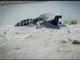 BBC. Прогулки с динозаврами. 09. Земля гигантов