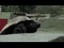 Honey Badger Houdini - Honey Badgers Masters of Mayhem - Natural World - BBC Two
