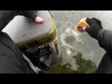 Ловля зимой чехони на гирлянду, залив Оболонь