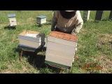Пчеловодство для начинающих. Многокорпусный улей и работа на пасеке