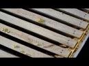 Рамки с полосками вощины