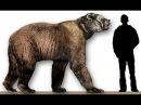 Доисторические хищники Короткомордый медведь Документальные фильмы Nat Geo Wild HD