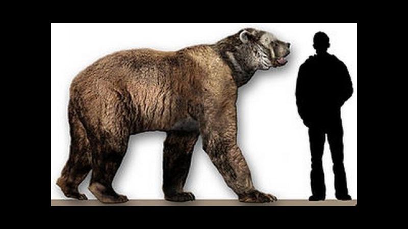 Доисторические хищники — Короткомордый медведь (Документальные фильмы Nat Geo Wild HD)