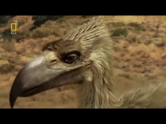 Доисторические хищники — Хищные птицы ящеры (Документальные фильмы Nat Geo Wild HD)