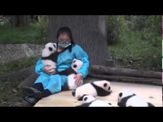 The world's best job  Wanna be a panda hugger - Funny Videos